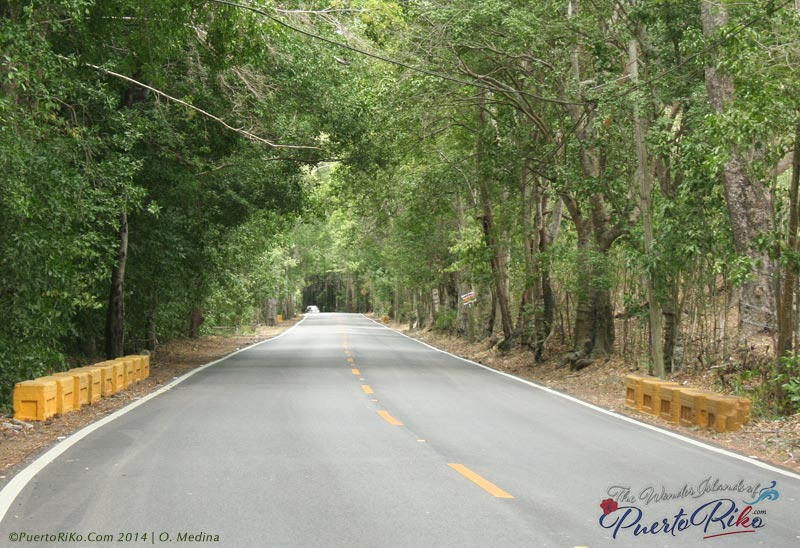 Road to Coamo and Orocovis